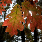 http://fotos.aufdemmond.de/wp-content/uploads/2013/11/IMG_1345_farbe-150x150.jpg