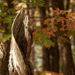 http://fotos.aufdemmond.de/wp-content/uploads/2013/11/IMG_1416_farbe-150x150.jpg