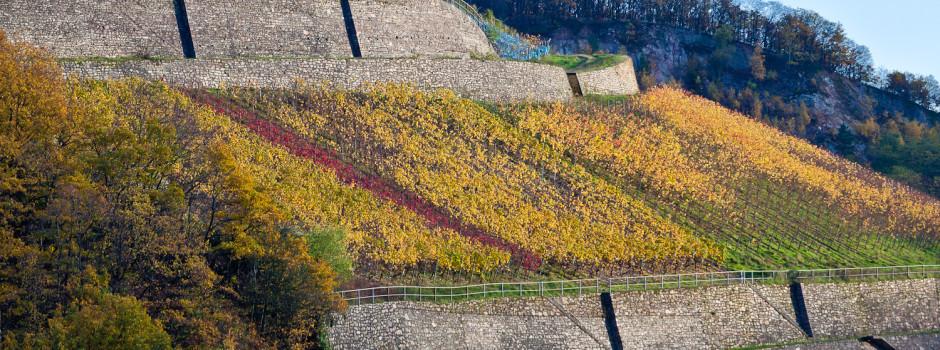 Weinberge im Rheingau