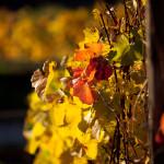 http://fotos.aufdemmond.de/wp-content/uploads/2013/12/IMG_1777_farbe-150x150.jpg