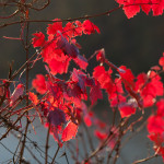 http://fotos.aufdemmond.de/wp-content/uploads/2013/12/IMG_1784_farbe-150x150.jpg
